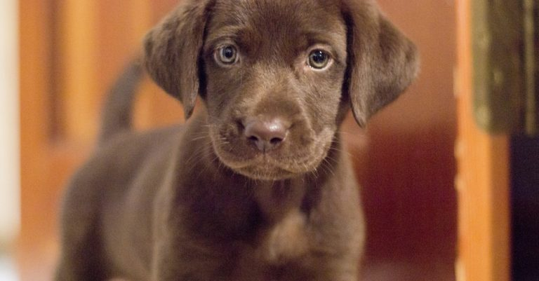 LIFE WITH ROUX #001: Our Milestone Dog | Creative Cajun Mama